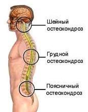 Шейно-грудной отдел позвоночника