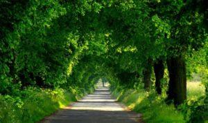 Красивая природа