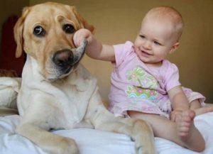 Малыш играется с собакой